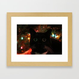 Bokeh Kitty Photo Framed Art Print