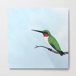 the studious male (ruby-throated hummingbird) Metal Print