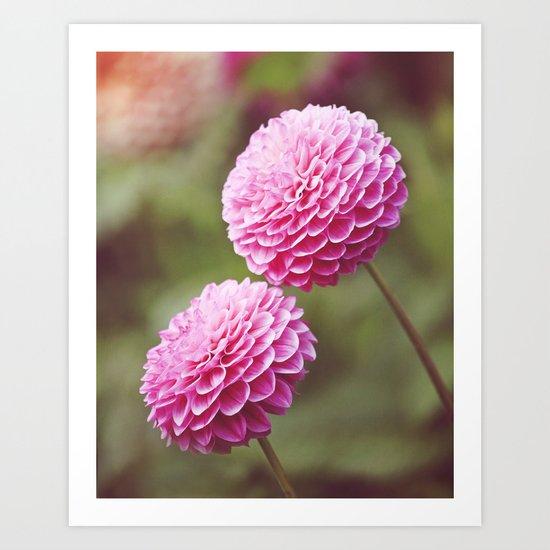 Chrysanthemums in Afternoon Light Art Print