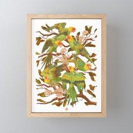 The extinction of the Carolina Parakeet. Framed Mini Art Print