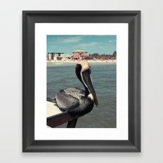 Florida Pelican Color Photo Framed Art Print
