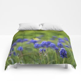 Grape Hyacinth in Spring Comforters