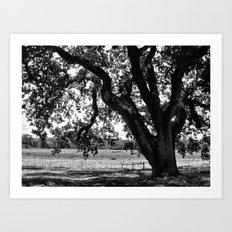 Under the Santa Rosa Sun Art Print