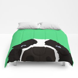 Begging Border Collie Comforters