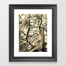 SNOW DUSTED CEDAR BRANCHES Framed Art Print