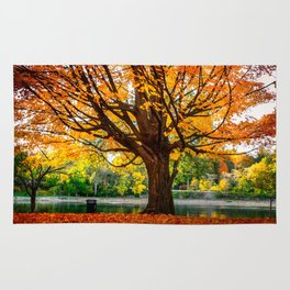 Many colors of fall Rug
