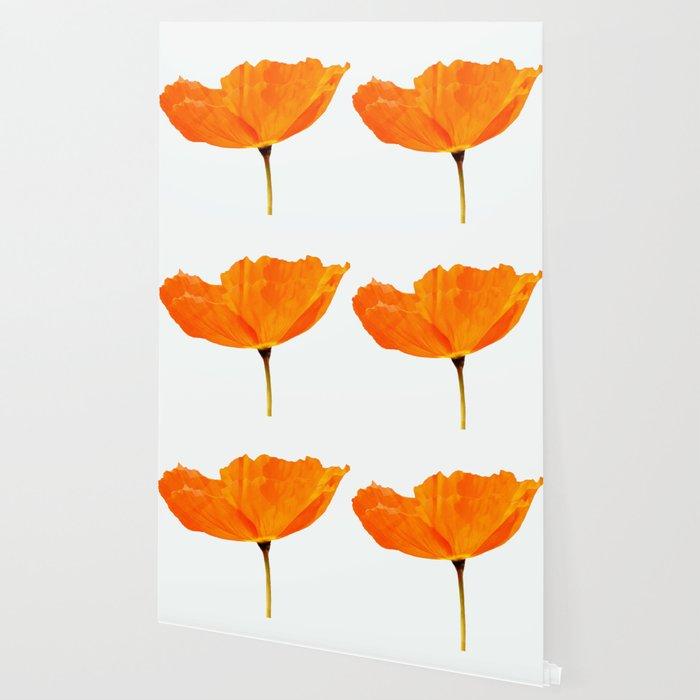 One And Only - Orange Poppy White Background #decor #society6#buyart Wallpaper