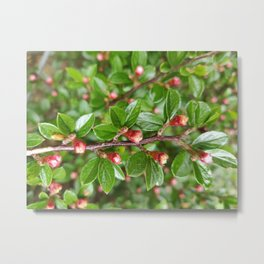 green and pink Metal Print
