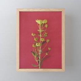 Summer colors | Floral Photography Framed Mini Art Print