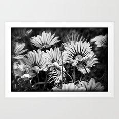 Desert Daisies (bnw) - Daisy Project in memory of Mackenzie Art Print