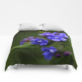 Omphalodes verna - JUSTART © Comforters