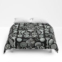 Ernst Haeckel - Mycetozoa (black) Comforters