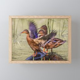Ducks Flapping Framed Mini Art Print