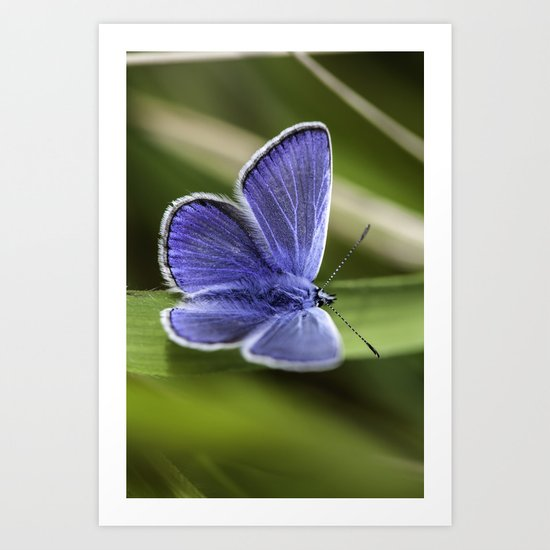 Beautiful Blue Art Print