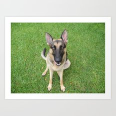 A German Shepherd smile Art Print
