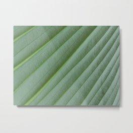 Under the Green Leaf Metal Print