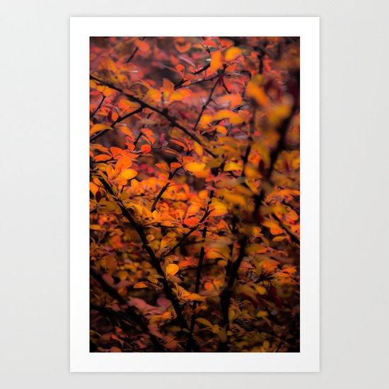 The redeeming qualities of a prickly bush  Art Print
