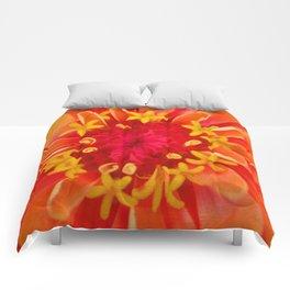 Orange Zinnia Comforters