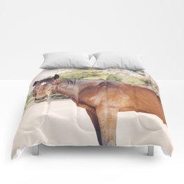 Kind Gulliver Comforters