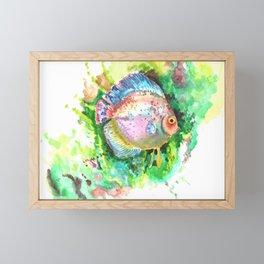 Aquarium Fish, Green Rainbow colors, Discus, Pink Green Illustration Framed Mini Art Print