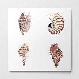 4 SEASHELLS Metal Print