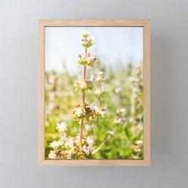 Nature photography White grass flower I Framed Mini Art Print