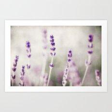 lavender lavender Art Print