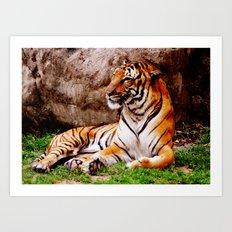 Malayan Tiger 4 Art Print