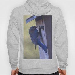 Eastern Bluebird Home Hoody