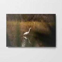 Great Egret in the Preserve  Metal Print