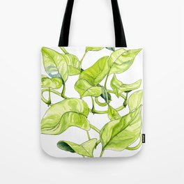 Devils Ivy Illustration Tote Bag