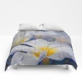 The Wind of Love Comforters