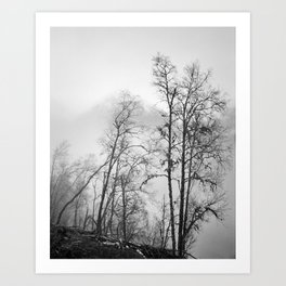 Timber IV Art Print