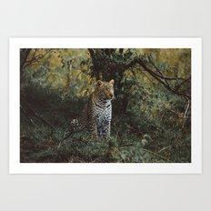 Jaguar Art Print