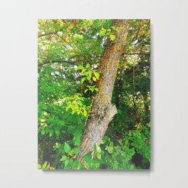 tree with moos Metal Print