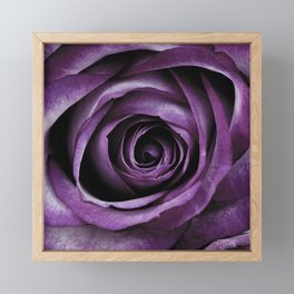 Purple Rose Decorative Flower Framed Mini Art Print
