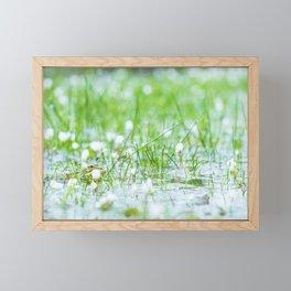 Green frog on a lake in spring Framed Mini Art Print