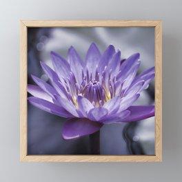 Purple Water Lily Framed Mini Art Print