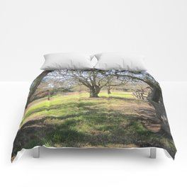 Trees by the magazine Comforters