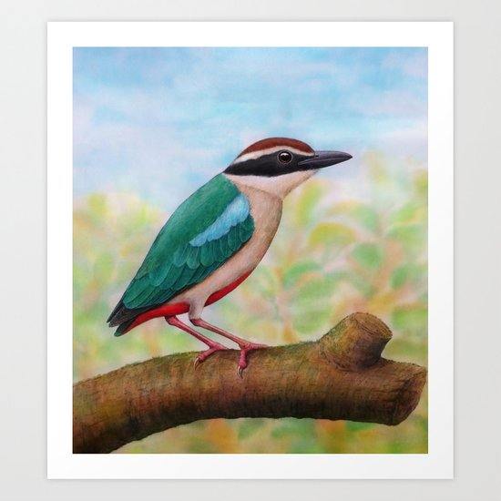 Fairy Pitta Art Print