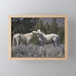 Wild Horses with Playful Spirits No 2 Framed Mini Art Print