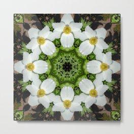 Canada anemone mandala 875 kal1 Metal Print