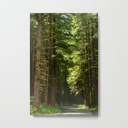 On A Road To The Rainforest Metal Print