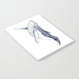 Baby humpback whale (Megaptera novaeangliae) Notebook