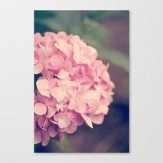 Pink Hydrandgeas Canvas Print