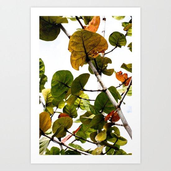 Seagrape Tree Art Print