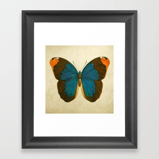 Lepidoptera # 1 Framed Art Print