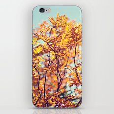 Mountain Fall iPhone & iPod Skin
