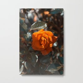 Flower Photography by Adrien prv Metal Print