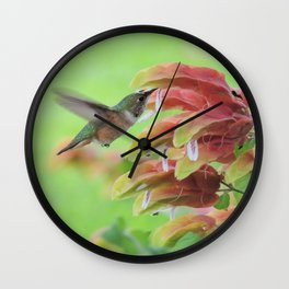 Hummingbird in Justicia Wall Clock